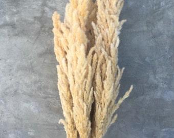 "Large Natural Eryanthus Bundle, Dried, Wedding Flowers - 35"" Tall"