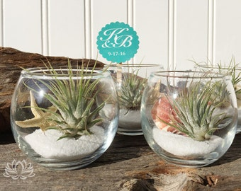 Tillandsia Beach or Woodland Votive Favors by Zentilly©