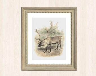 Vintage Reindeer Stitch Pattern Canadian Pattern Instant Download Cross Stitch Winter Stitch Decor Christmas Reindeer