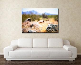 Rocks in desert / Canvas Print