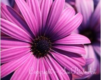 """Purple Flower Print, flower print, wall art, home decor, fine art, flower picture, modern art, """"My Plum Daisy"""""""