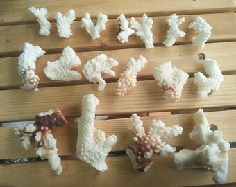 Little coral reef  - Real Sea Coral Fan White Coral - Marimo Terrarium Accessories/Aquarium Decoration