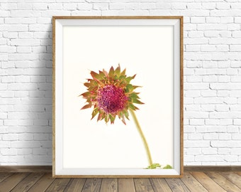 """thistle, fine art print, instant download art, printable art, photography, instant download, botanical print, pink -""""Prickly Disposition"""""""