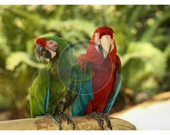 Nature photography-Parrots