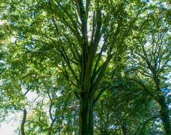 Tree - Botanical Gardens