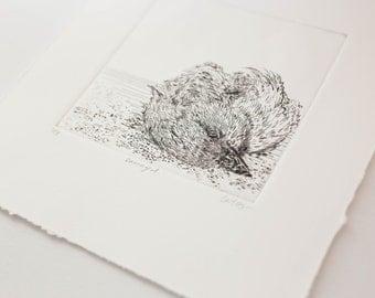 Small Dead Bird Engraving