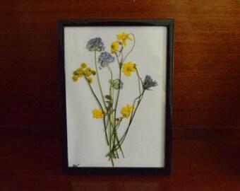 Pressed Flowers / California Wildflowers