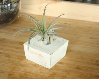 Painted Wooden Air Plant Holder