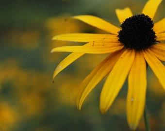 Photograh Print - Flower in Field