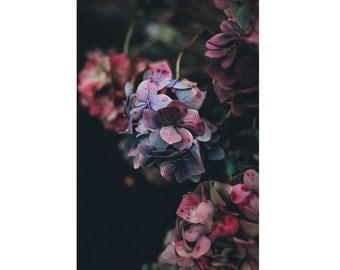Flowers Photo - Botanical - Nature Photo - Purple Flowers - Vertical - Digital Photo - Digital Download - Instant Download - Wall Decor