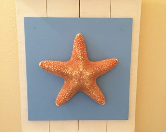 Framed Jungle Starfish, Driftwood, Coastal Decor, Beach Decor, Bathroom Decor, Nautical Decor