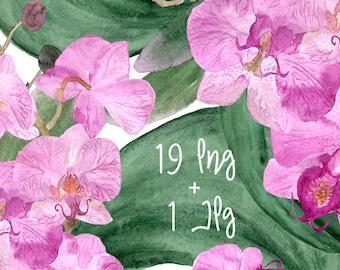 19 Watercolor Orchid Clip Art + Print