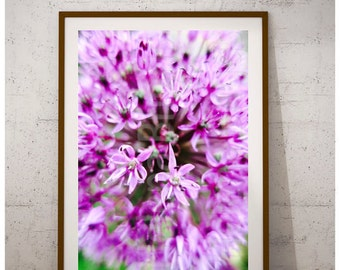 Allium | Large Wall Art, Large Wall Decor, Large Rustic Wall Art, Large Rustic Wall Decor, Large Prints, Large Photography, Large Flowers