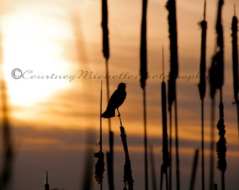 Chirping Bird in the Sunset