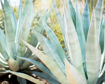 Succulents Photography Agave Photo Print, Desert Photography - Arizona Photography, Southwest Fine Art, Succulents, Aloe, Agave