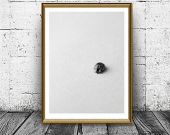 Ladybird print etsy for Minimal art venezuela