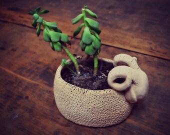 Capricorn vase with plant fat