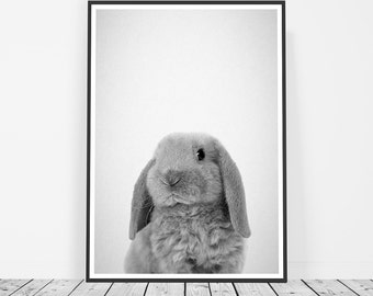 Baby Rabbit Print, Bunny Print, Baby Animal Photos, Baby Animal Art, Nursery Prints, Baby Nursery Animal Print, Nursery Animal Photography