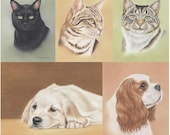 Pet Portraits Drawing Pack