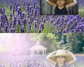 Lavender Field Backdrop