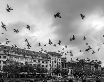 Escaping the Crowds - Manchester - City - Birds - England - Black and White - Street Photography