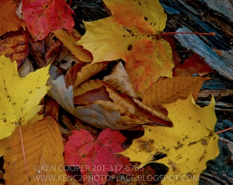 Autumn, Fall, Leaves, Red, Yellow, Brown, Colorful
