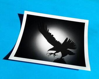 Hawk. Black and white photographic hand print.