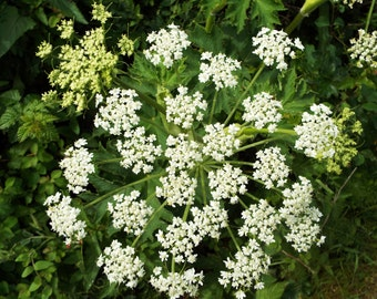 "Native Flower in White 6x9"" Print"