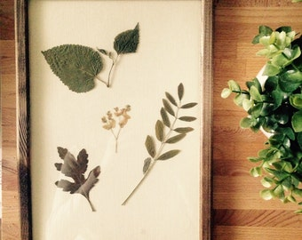 Herbarium 04