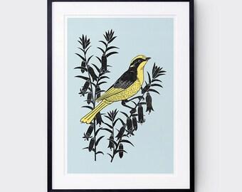 Helmeted Honeyeater Art Print / Australian Birds / Rare Bird / Giclee Print / Poster / Bird Print