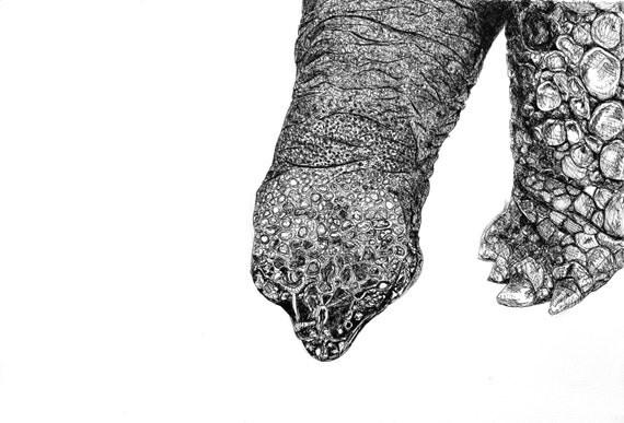 Tortoise Fine Art - Animal Print - Black and White Wildlife Home Decor - Contemporary Artwork
