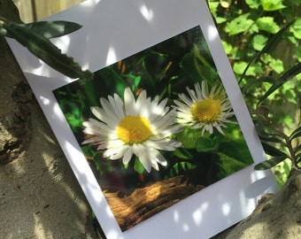 Greeting card dear daisies