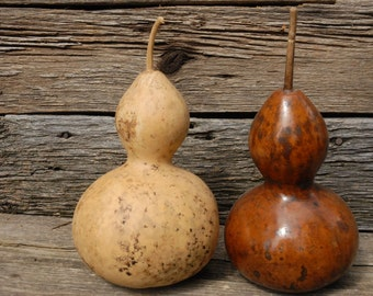 Two birdhouse gourds