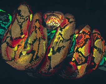 Coiled Snake limited edition signed giclee fine art print