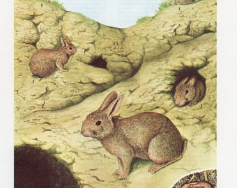 Vintage Rabbit Print - 1960's Vintage Animal Lithograph, Rabbit, Rabbit Print, Rabbit Lithograph, Rabbit Plate, Vintage Print, Vintage Plate