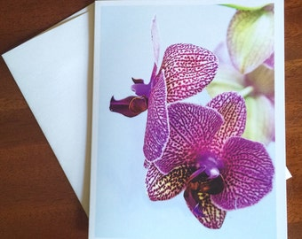Purple Moth Orchid Photo, Blank Note Card, Original Photography, Floral Art Card, Stationery