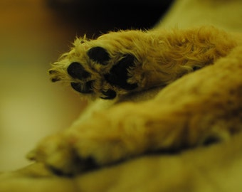 5x7 Photo // Puppy Paws // Other Sizes Available
