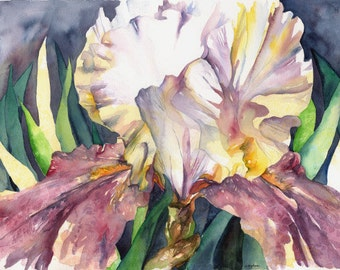 Purple White Iris Painting Original Watercolor Art Free Shipping