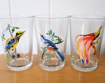 vintage tropical bird glasses