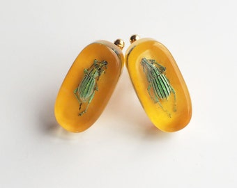 Funky yellow lucite cufflinks with real exotic bugs