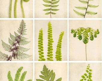 Botanical Prints, Botanical Art, Fern Art, Print Set, Nature Photography, Fine Art Photos, Woodland Decor Nature Photo Set, Set of 9 Prints
