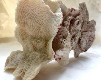 Natural Rugosa Coral Specimen - Huge White Ocean Formation