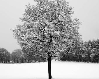 Lonely tree black and white fine art photography