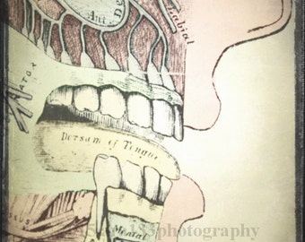 Anatomical Art, Medical Anatomy Print, Mouth, Teeth, Face, Oddity, Strange, Surreal, Neutral, 5x5 inch Fine Art Photography Print