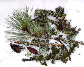 Dried Moss Lichen Terrarium Natural Authentic Forest Branches Pine Cones