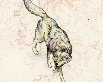 "Wolf art on topography map, 8"" x 10"" Archival print, wildlife illustration, animal print, wall art, wolf illustration"