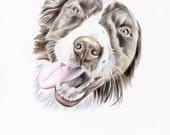 8 x 10 inch custom colored pencil pet portrait
