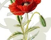 Flower Poppy Vintage Illustration Digital Printable Clip Art Image Download Wildflower