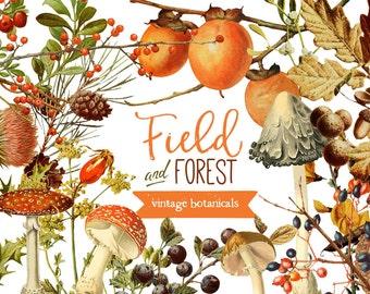 INSTANT DOWNLOAD - Field & Forest Vintage Botanicals Graphics