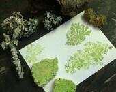 Lichen Rubber Stamps